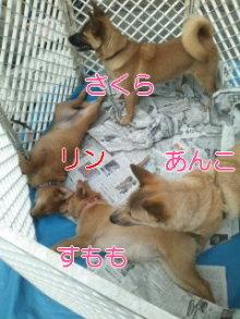 うめめのいつもワンコと一緒ブログ-110410_1237~01_0001.jpg