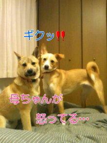 うめめのいつもワンコと一緒ブログ-110420_0018~01_0001.jpg