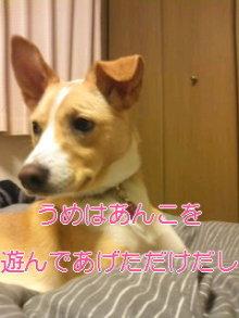 うめめのいつもワンコと一緒ブログ-110420_0010~02_0001.jpg