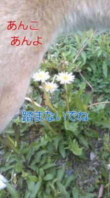 うめめのいつもワンコと一緒ブログ-110510_1008~01_0001.jpg