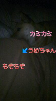 うめめのいつもワンコと一緒ブログ-110517_0031~01.jpg