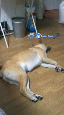 うめめのいつもワンコと一緒ブログ-110520_1903~01_0001.jpg