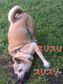 うめめのいつもワンコと一緒ブログ-110522_0941~02_0001.jpg
