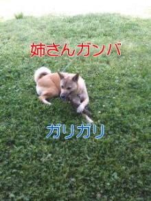 うめめのいつもワンコと一緒ブログ-110522_1017~01_0001.jpg