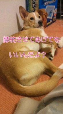 うめめのいつもワンコと一緒ブログ-110521_2141~01_0001.jpg