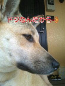 うめめのいつもワンコと一緒ブログ-110526_0825~01.jpg