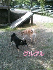 うめめのいつもワンコと一緒ブログ-110604_1325~01_0001.jpg