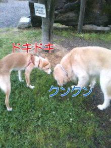 うめめのいつもワンコと一緒ブログ-110618_1235~01_0001.jpg