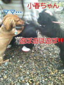 うめめのいつもワンコと一緒ブログ-110618_1222~01_0001.jpg
