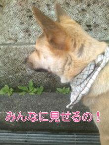 うめめのいつもワンコと一緒ブログ-110619_1047~01_0001.jpg