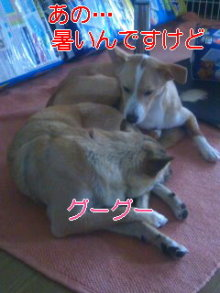 うめめのいつもワンコと一緒ブログ-110619_1521~01_0001.jpg