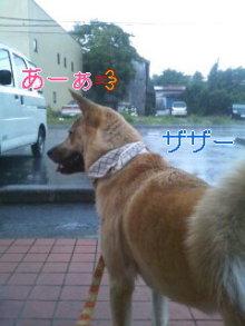 うめめのいつもワンコと一緒ブログ-110621_1744~01_0001.jpg