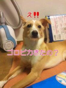 うめめのいつもワンコと一緒ブログ-110621_1804~01_0001.jpg