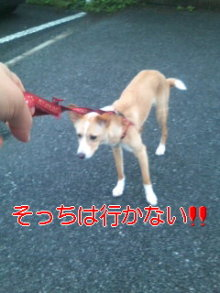 うめめのいつもワンコと一緒ブログ-110621_1858~01.jpg