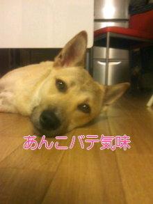 うめめのいつもワンコと一緒ブログ-110622_2342~02.jpg