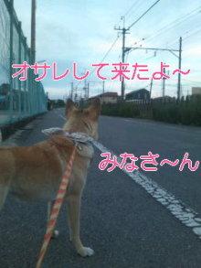 うめめのいつもワンコと一緒ブログ-110623_1840~01_0001.jpg