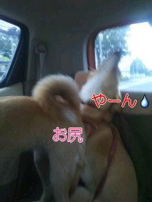 うめめのいつもワンコと一緒ブログ-110625_1647~01_0001.jpg