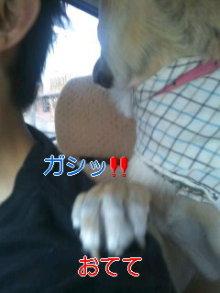 うめめのいつもワンコと一緒ブログ-110625_1642~01_0001.jpg
