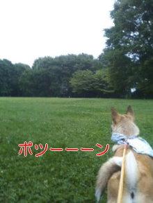 うめめのいつもワンコと一緒ブログ-110627_1803~01_0001.jpg