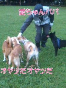 うめめのいつもワンコと一緒ブログ-110717_1846~01_0001.jpg