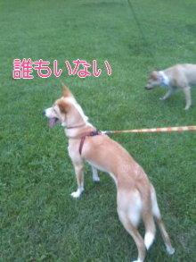 うめめのいつもワンコと一緒ブログ-110718_1830~01_0001.jpg