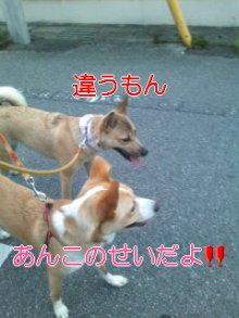うめめのいつもワンコと一緒ブログ-110718_1850~01_0001.jpg