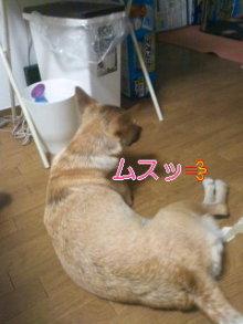 うめめのいつもワンコと一緒ブログ-110720_2216~01.jpg