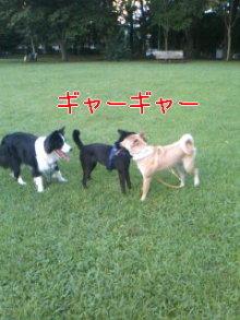 うめめのいつもワンコと一緒ブログ-110721_1818~01_0001.jpg