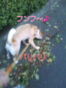 うめめのいつもワンコと一緒ブログ-110721_1849~01_0001.jpg
