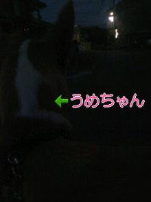 うめめのいつもワンコと一緒ブログ-110721_1921~01.jpg