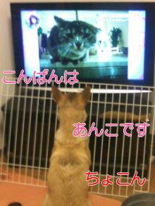 うめめのいつもワンコと一緒ブログ-110721_2007~03_0001.jpg