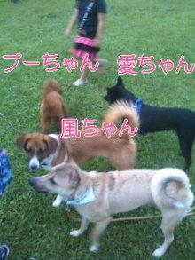 うめめのいつもワンコと一緒ブログ-110725_1832~01_0001.jpg