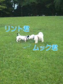 うめめのいつもワンコと一緒ブログ-110725_1834~01_0001.jpg