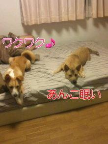 うめめのいつもワンコと一緒ブログ-110731_0114~01_0001.jpg