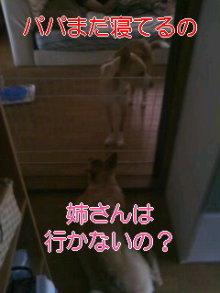 うめめのいつもワンコと一緒ブログ-110814_0646~01_0002.jpg