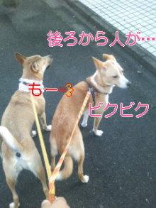 うめめのいつもワンコと一緒ブログ-110830_0723~01_0001.jpg