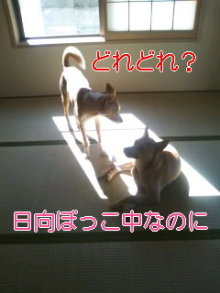 うめめのいつもワンコと一緒ブログ-110830_0900~01_0001.jpg