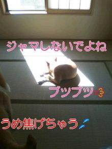 うめめのいつもワンコと一緒ブログ-110830_0900~02_0001.jpg