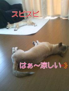 うめめのいつもワンコと一緒ブログ-110830_1438~01.jpg