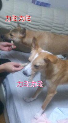 うめめのいつもワンコと一緒ブログ-110904_0140~01_0001.jpg