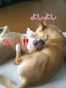 うめめのいつもワンコと一緒ブログ-110906_1448~01_0001.jpg