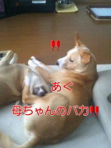 うめめのいつもワンコと一緒ブログ-110906_1448~02_0001.jpg