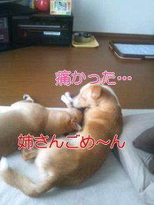 うめめのいつもワンコと一緒ブログ-110906_1447~01_0001.jpg