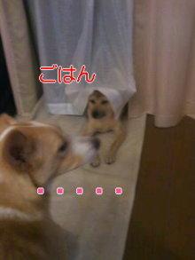 うめめのいつもワンコと一緒ブログ-110911_2032~01_0001.jpg