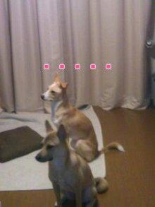 うめめのいつもワンコと一緒ブログ-110921_1816~01_0001.jpg