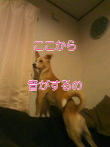 うめめのいつもワンコと一緒ブログ-110921_1832~01_0001.jpg