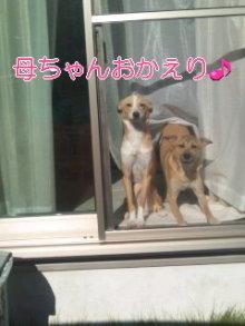 うめめのいつもワンコと一緒ブログ-110923_1447~01_0001.jpg