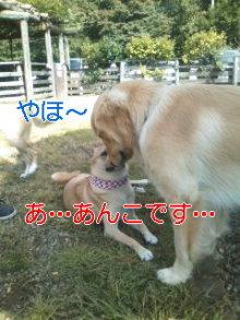 うめめのいつもワンコと一緒ブログ-111010_1141~01_0001.jpg
