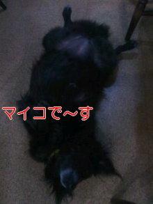 うめめのいつもワンコと一緒ブログ-111203_1943~01_0001.jpg