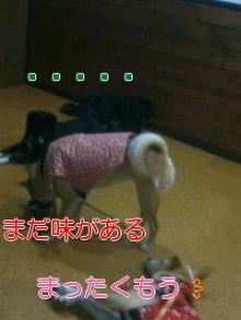 うめめのいつもワンコと一緒ブログ-111203_2011~01_0001.jpg